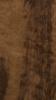 Imbula